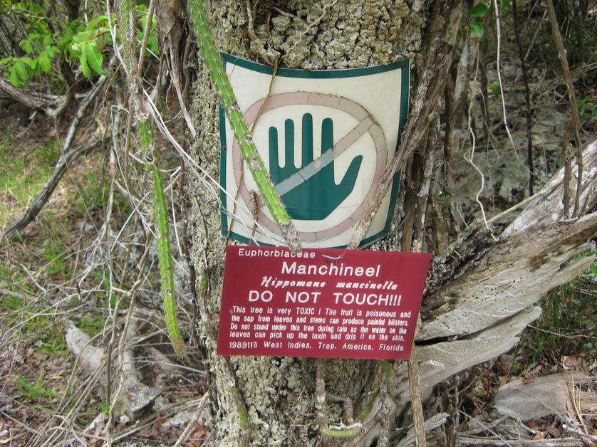 otrovno drvo
