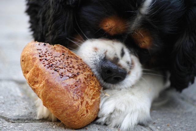 Štene jede zemičku, da li je to najbolja hrana za štence?